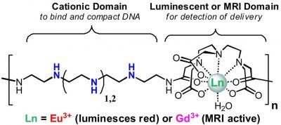 polymer-beacons-for-luminescence